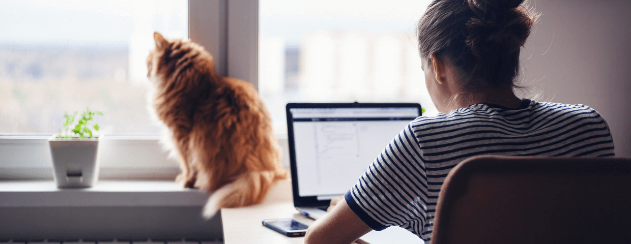 Woman working at home and cat sitting on the window